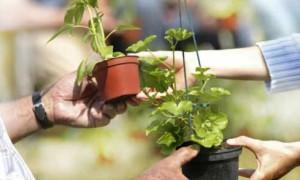 Bourse aux plantes Sottevast